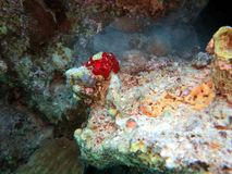 Red Sea Corals royalty free stock photo