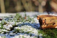 Wonderfull vinterbakgrunder Arkivfoto
