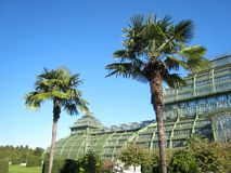 Wonderfully Palm house in vienna with giant palms and garden flowers on a sunny day. Wonderfully summer autumn atmosphere blue sky with metallic palm house royalty free stock photo
