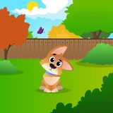 Wondering cartoon corgi sitting on backyard. Sunny summer landscape with green meadow, bushes, trees, wooden fence, blue. Sky and flying butterfly. Colorful Royalty Free Stock Photography