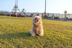 Wondering Dog Stock Photos