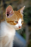 Wondering eyes! Royalty Free Stock Images