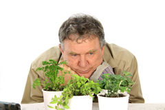 Wondering Nurseryman Royalty Free Stock Photos
