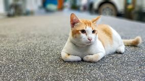 Wondering orange and white Cat lays down on the street and gazing something. Wondering orange and white colour cat lays down on the street and gazing something stock images
