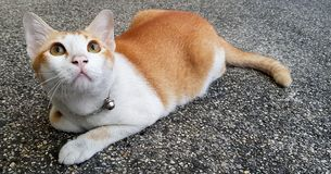 Wondering orange and white cat lays down on the street and gazing something. Wondering orange and white colour cat lays down on the street and gazing something stock photos
