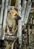 Wondering What's There, Outside!. A dog curiously inserted his head out from a hole to check what's outside Stock Photo