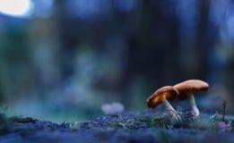 wonderland Стоковое Изображение