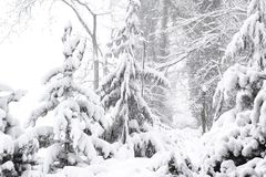 Wonderland Peace winter nature Beautiful Winter landscape scene background with snow covered trees Beauty winter backdrop Frosty stock photography