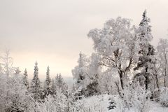 Wonderland quiet winter frozen forest. Pastel colors royalty free stock image