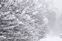 Wonderland Trees covered snow Beautiful Winter landscape scene background with snow covered trees Beauty winter backdrop Frosty. Trees in snowy forest Branches royalty free stock image