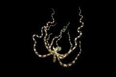 Wonderpuss bläckfisk Royaltyfri Fotografi