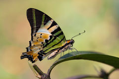 Wonders of nature. A butterfly in the park on the top of green leaf Stock Image