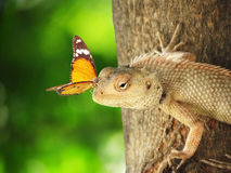 Wonders of nature. A simple wonder of nature, a beautiful orange viceroy or monarch butterfly sitting on a lizard closeup. It illustrates love, friendship and