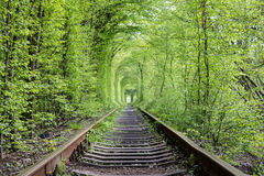 Wonders of nature - tunnel of love. Ukraine. Royalty Free Stock Photography