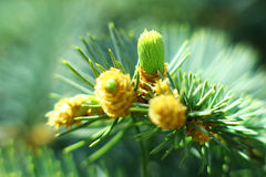 The wonders of nature. Under a macro lens Royalty Free Stock Images