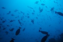 Wonders of undersea life Stock Images