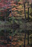 A wondrous & splendid autumnal reflection in the Cleveland Metroparks - Ohio - USA. Cleveland Metroparks is an extensive system of nature preserves in Royalty Free Stock Images