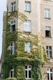 Woningbouw met vele vensters en klimop royalty-vrije stock fotografie