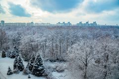 Wonter landscape. Frozen trees in a forest covered by snow near the city of Voronezh Stock Image