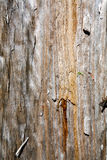 Wood Royalty Free Stock Images