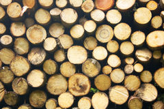 Free Wood Royalty Free Stock Photography - 10555937