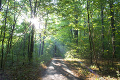 Wood. Morning forest with a footpath and sun beams Royalty Free Stock Photo