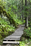 Wood. Trees and path in old forest Royalty Free Stock Photos