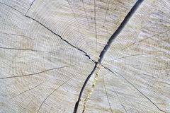Wood. Background from the old brown cut log Stock Photos