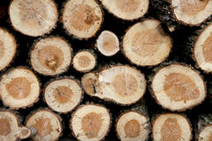 Free Wood Royalty Free Stock Images - 11546189