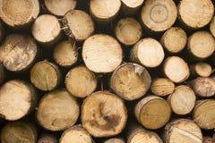 Free Wood Royalty Free Stock Photos - 11821918
