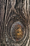 Wood. Old grey wood textured for abstract bacground Stock Image