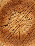 Wood. Cut tree suitable as background Royalty Free Stock Images
