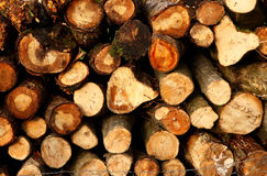Wood. Tree trunks, wood for winter royalty free stock image