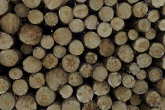 Wood. On a pile in the forest ready for transport royalty free stock photo