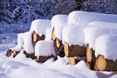Wood. Winter landscape with pine logs under snow-Styria,Austria Royalty Free Stock Photo