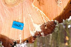 Wood Royalty Free Stock Photo
