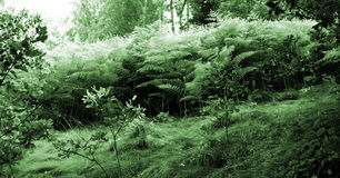 Wood. Out of fern stock images