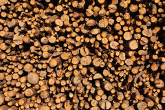 Wood. Close up freshly cut wood piled up Royalty Free Stock Photos
