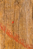 Wood. Lose-up piece of wood plank Stock Photo
