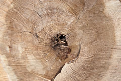 Wood. Brown wooden close-up texture as background Stock Photos