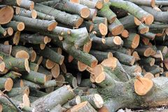 Wood. Picture of fresh cutted branches of wood Stock Photo