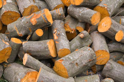 Wood. For fireplace alternative energy royalty free stock image