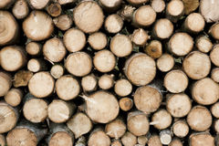 Wood. Pile of wood from birch trees Stock Photography