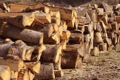 Wood. Logs cut in stacked for firewood Stock Photo
