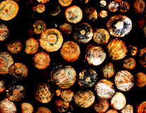 Wood. Piled up logs of cut wood in a chaotic pattern Stock Photo