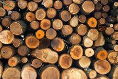 Wood. Log Pile Stock Image