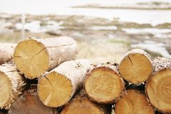 Free Wood Royalty Free Stock Photography - 854277