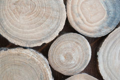 Wood. Abstract photo of a pile of natural wooden logs background, top view. Round teak wood stump background. Tree stump background. Pile of wood logs stumps Royalty Free Stock Image