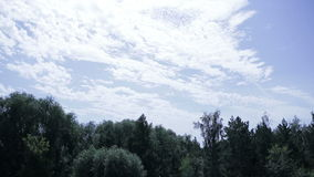 Wood against the clear blue sky. Green wood against the clear blue sky stock video footage