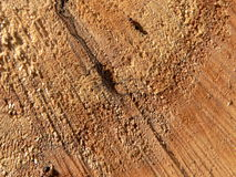 Wood and ants Royalty Free Stock Image